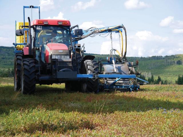 Wild Blueberry Harvester