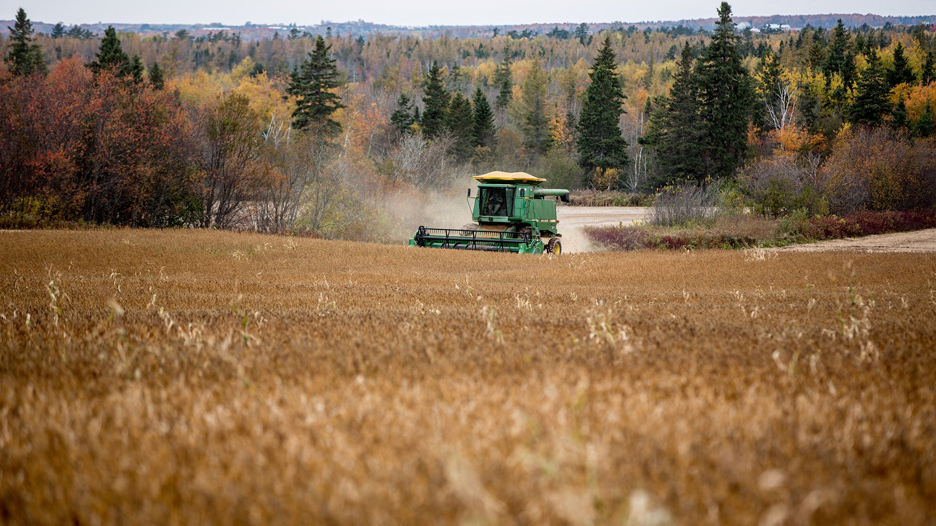 Harvesting Soybean