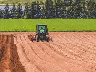 Hilling Potato rows