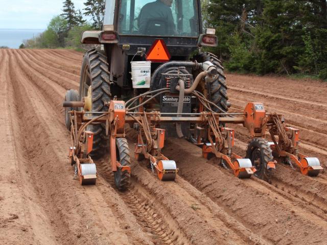 4-Row Carrot Planter