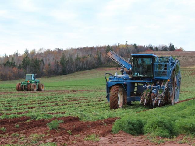 Self Propelled carrot harvester