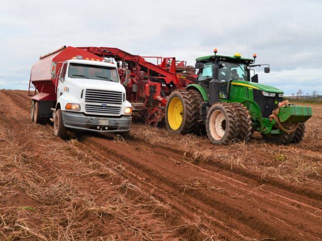 Potato harvester and truck